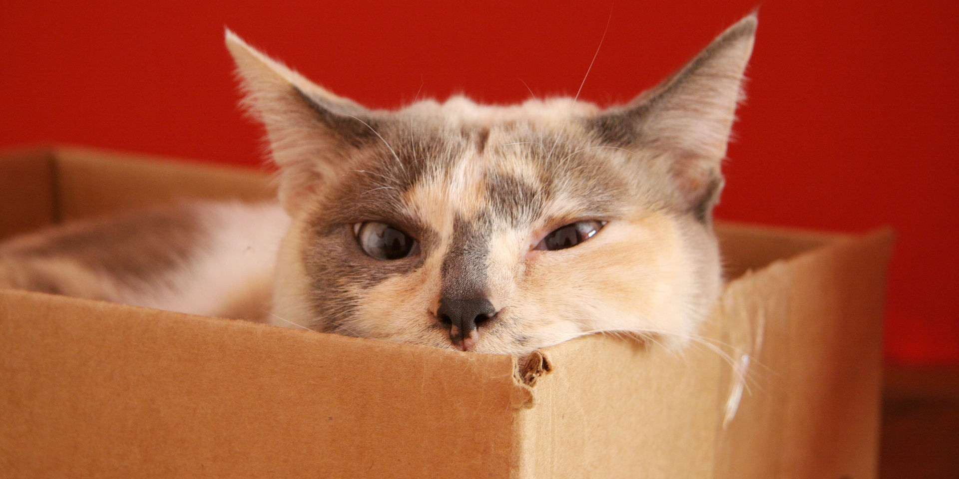 Cat in a box. Photo credit: Giane Portal via Free Images.