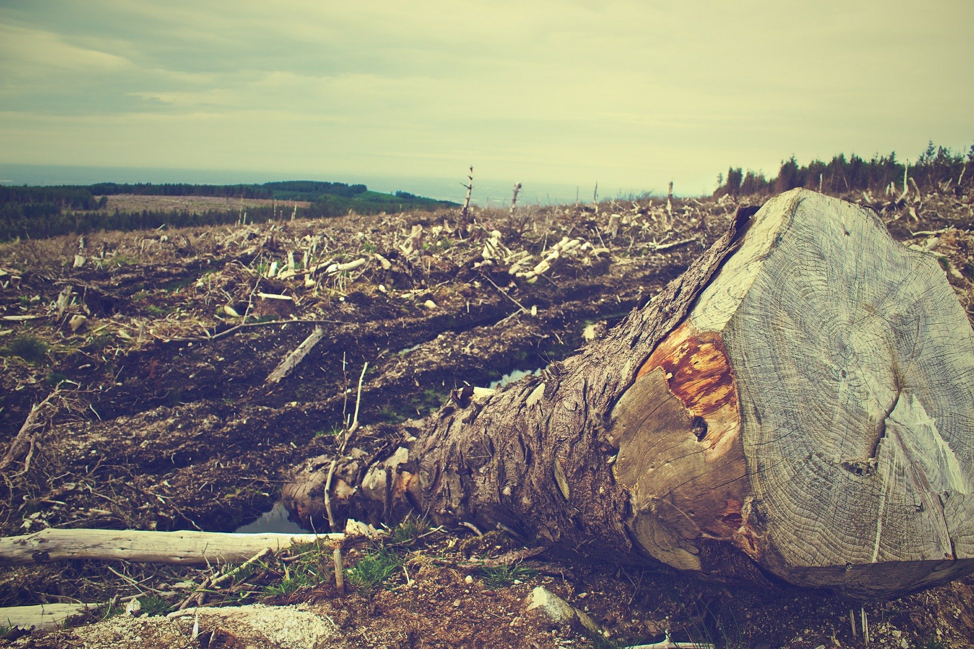 Deforestation. Image credit Picography on Pixabay