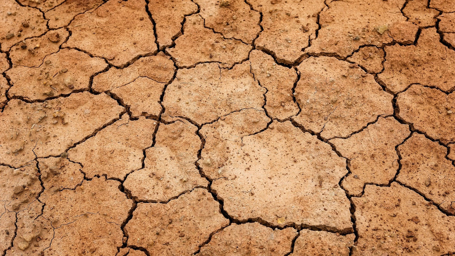 Drought. Photo credit: Peter H on Pixabay.