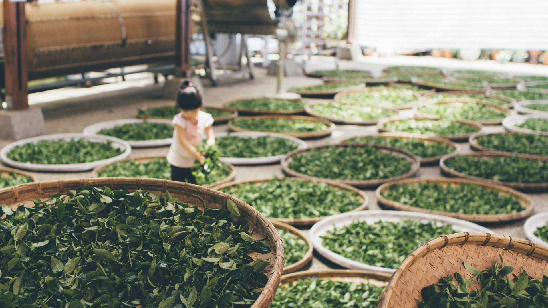 Drying tea leaves. Photo credit: 蔡 嘉宇 on Unsplash.