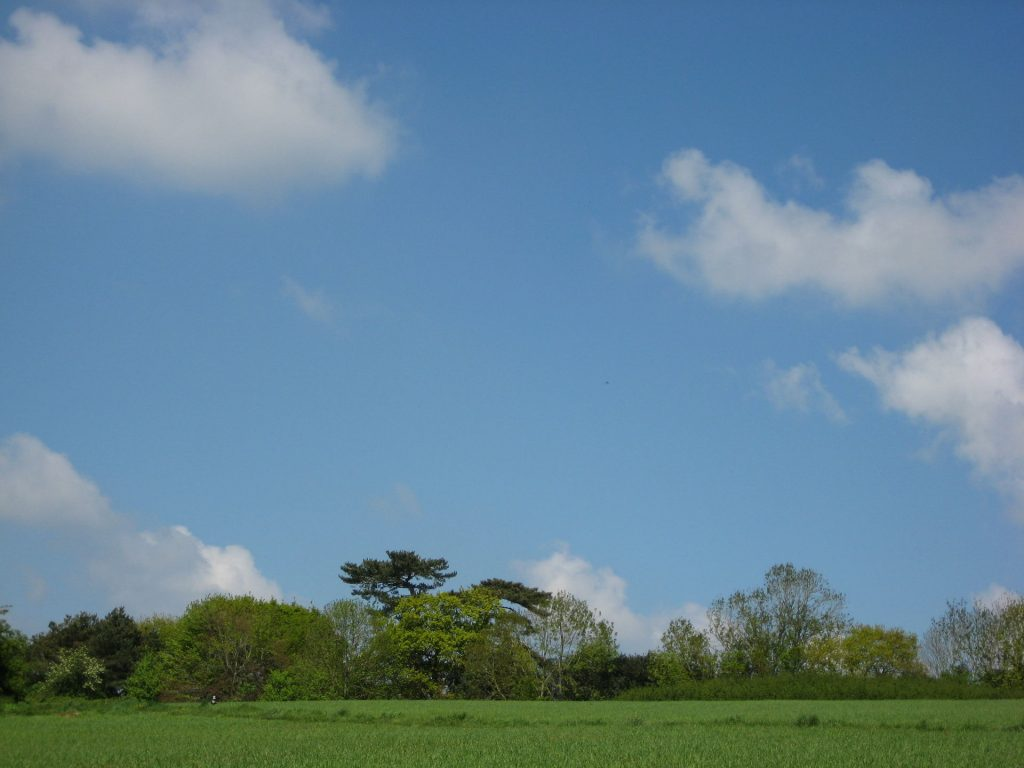 Ludwell trees