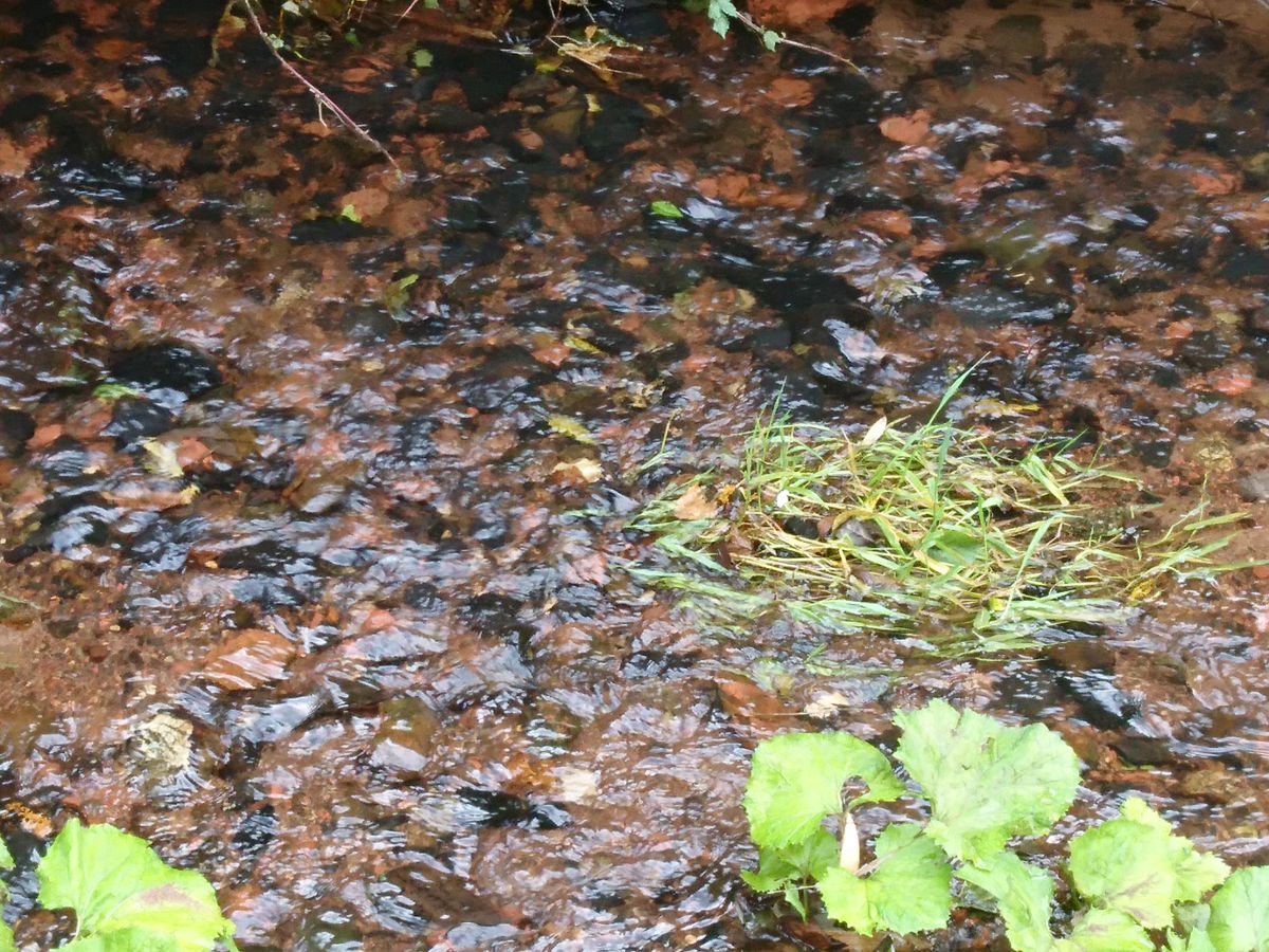 Mixed aggregate river bed