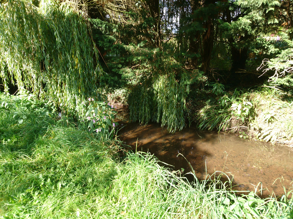 Trailing willow, but unnatural riverbed