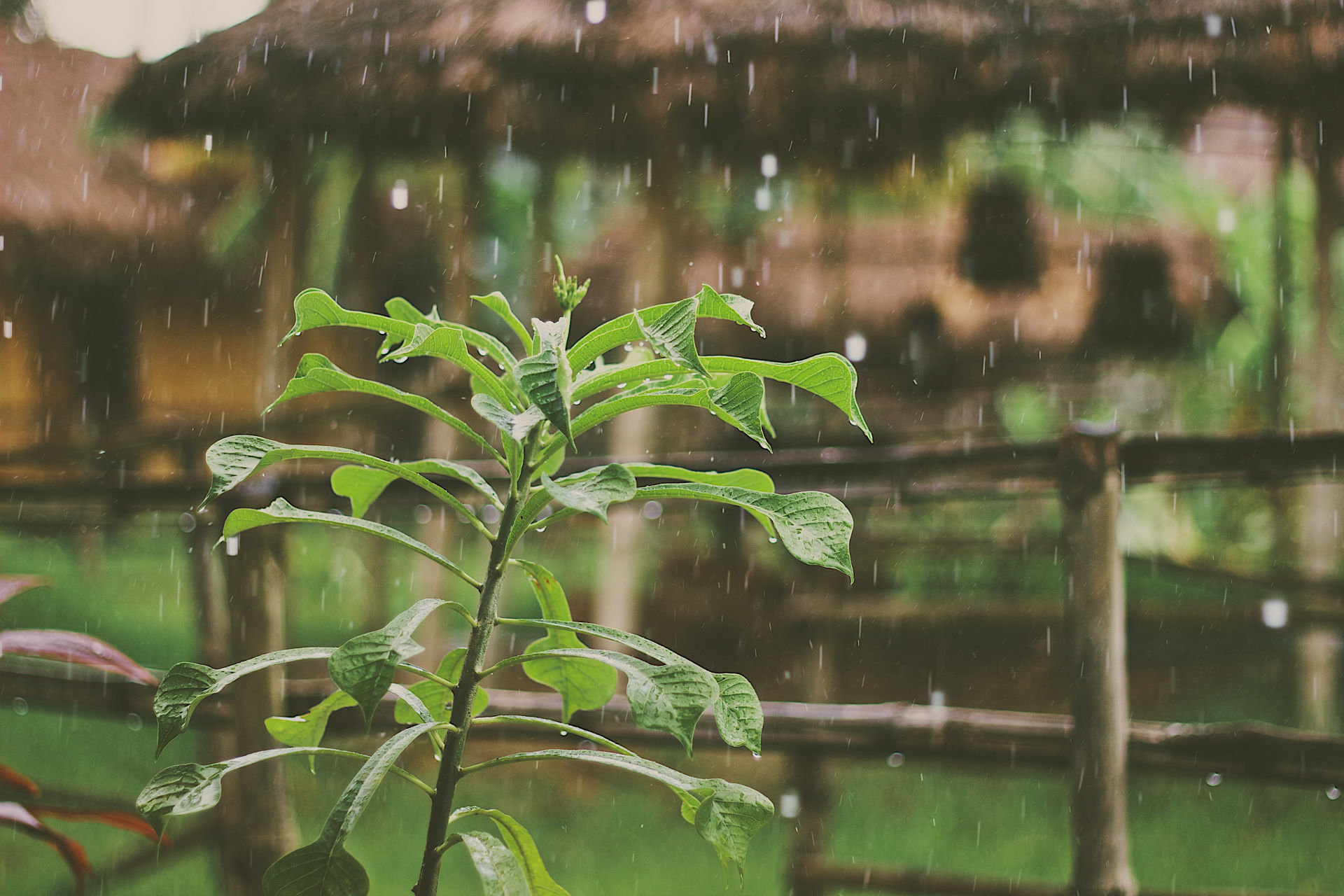 During Lent 2015, EcoChurch Southwest is promoting a Carbon Fast, focusing on water. You can sign up to daily emails containing an action, bible reading and reflection. I wrote about rain as a blessing for today's reflection. Photo credit: Mike Kotsch on Unsplash.